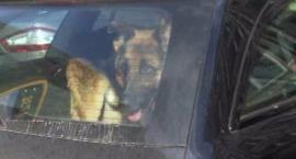 Strażnicy miejscy apelują - w czasie upałów nie pozostawiajmy zwierząt w samochodach!