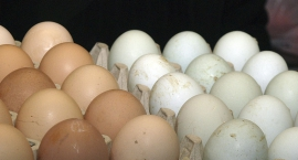Uwaga na jaja z salmonellą!